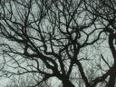 arbres004.jpg